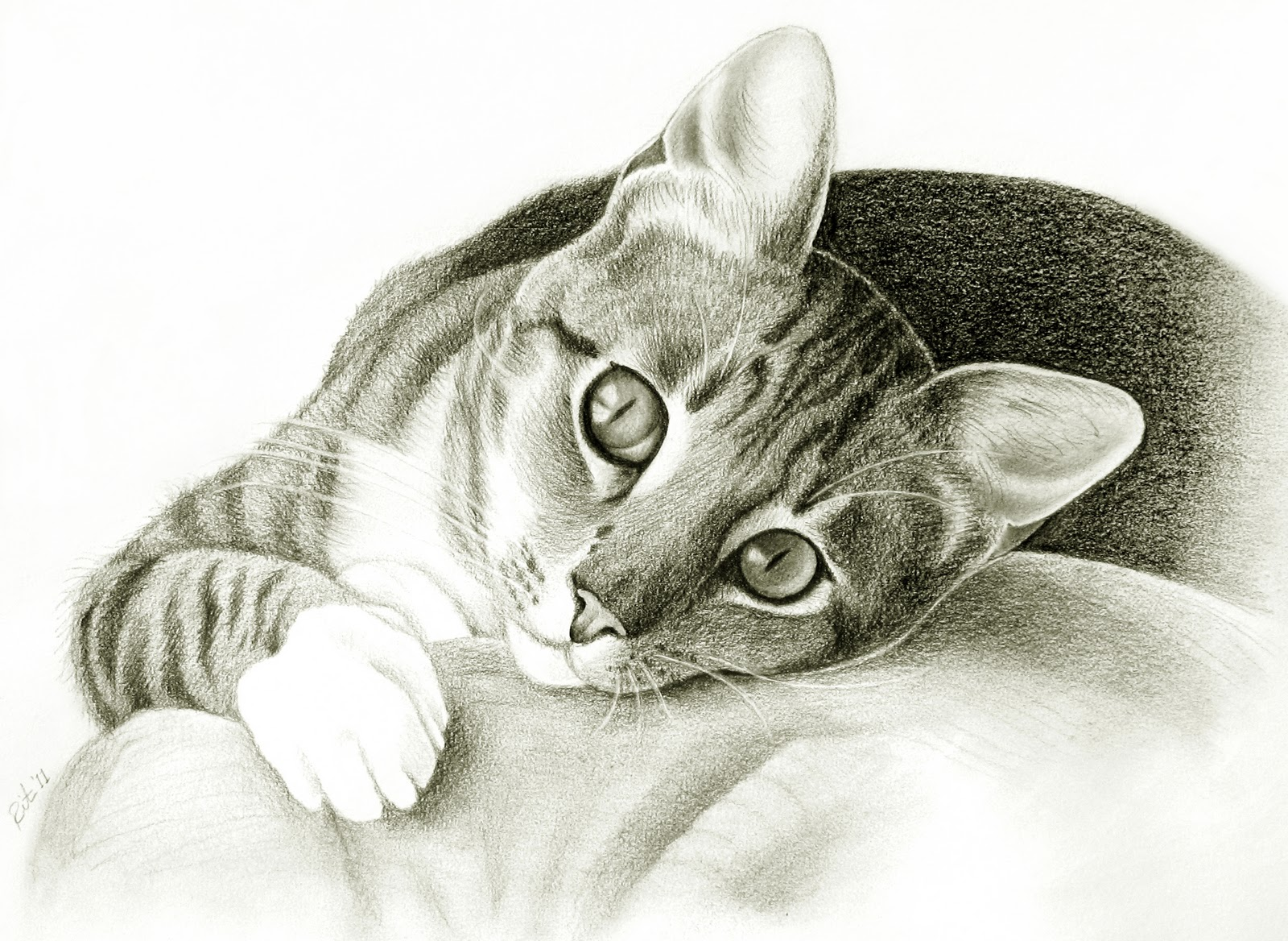 Detailed Black And White Cat Drawing
