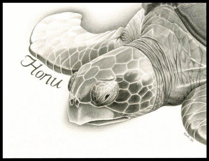 Hawaiian Sea Turtle | I Sketch Pets