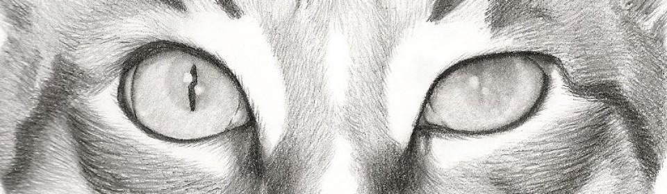 I Sketch Pets